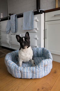 Malvern Lapis Stripe Pet Bed - dogs