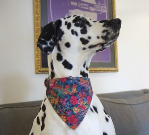 Beatrix Liberty Fabric Dog Bandana