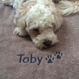 Personalised Dog Towel - beds & sleeping