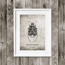 Vintage Beetle Poster | Insect Print