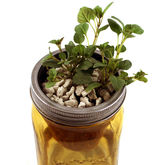 A Herb Garden In A Jar - garden