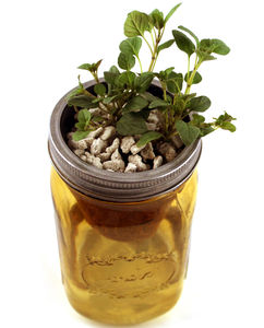 A Herb Garden In A Jar - flowers, plants & vases