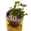 A Herb Garden In A Jar