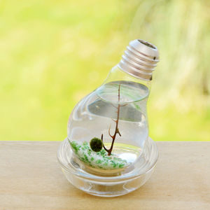 Lightbulb Marimo Moss Ball Terrarium - flowers, plants & vases
