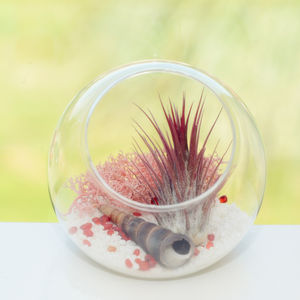 Glass Orb Vase Beach Themed Air Plant Terrarium - terrariums