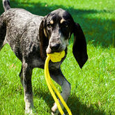 Rope Dog Toy - pets