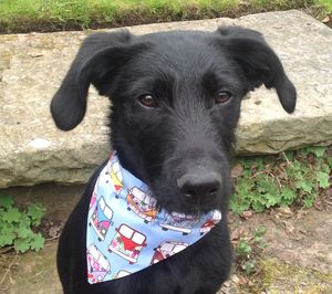 Dog Bandana Reversible - dogs