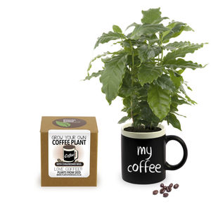 Grow Your Own Coffee Plant With Chalkboard Mug