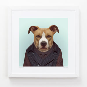 American Staffordshire Dog Art Print - animals & wildlife