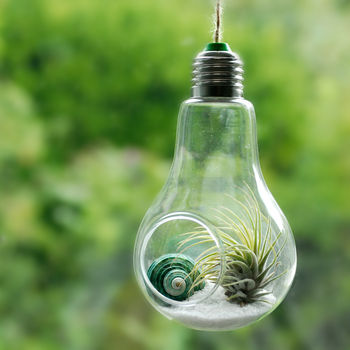 Lightbulb Air Plant Hanging Terrarium