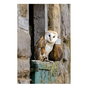 'Barn Owl' Limited Edition Photographic Print