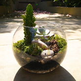 Dad's Terrarium Kit - garden