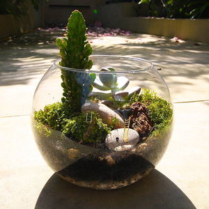 Dad's Terrarium Kit - gardening