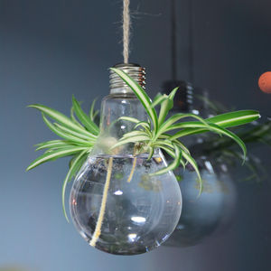 Lightbulb Hanging Glass Vase