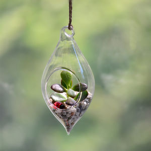 Teardrop Hanging Glass Vase Money Plant Terrarium - flowers & plants