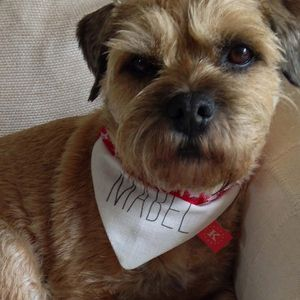 Personalised Doggie 'All Stars' Bandanas - what's new