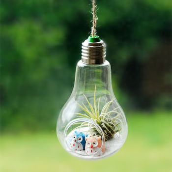 Hanging Light Bulb Air Plant Terrarium With Owls