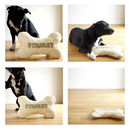 dog bone cushion photo shoot