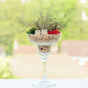 Air Plant Terrarium In A Wine Glass - house plants