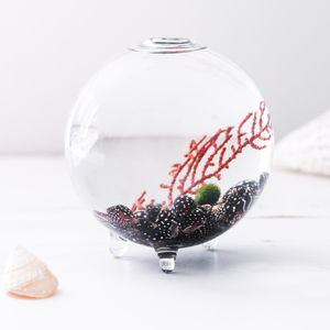 Terrarium, Sea Fan And Moss