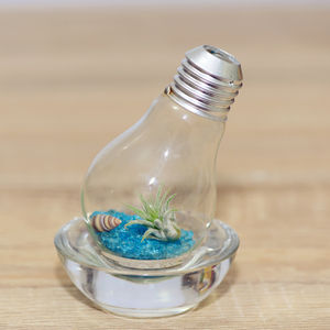 Lightbulb Air Plant Terrarium - flowers & plants