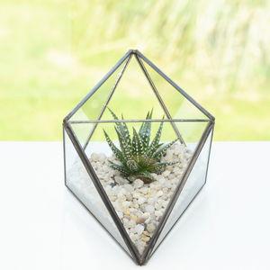 Octahedron Geometric Succulent Terrarium