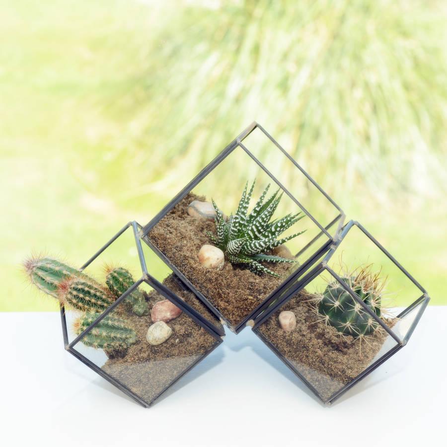 Clustered Cube Succulent Cactus Terrarium By Dingading Terrariums