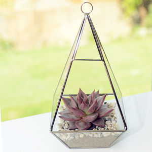 Pyramid Shaped Glass Vase Succulent Terrarium - house plants
