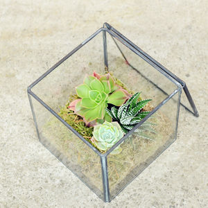 Glass Cube Succulent Terrarium - flowers & plants