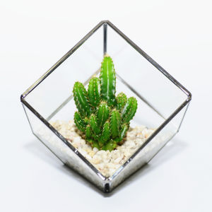 Glass Cube Cactus Terrarium - home accessories