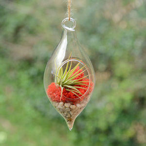 Teardrop Hanging Glass Vase Air Plant Terrarium - flowers & plants