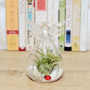 Hanging Glass Angel Air Plant Terrarium - living room