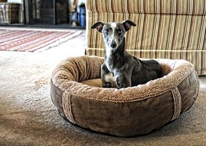 Wraparound Fleece Dog Bed Medium - beds & sleeping