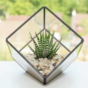 Glass Cube Succulent Terrarium Kit - the greenhouse edit