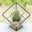 Glass Cube Succulent Terrarium Kit with Natural Colour Gravels