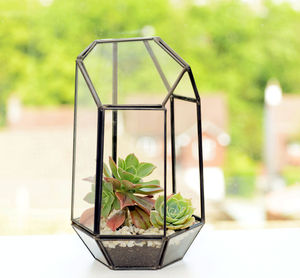 Polyhedron Geometric Succulent Terrarium - sale by category