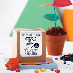 Grow Your Own Coffee Plant Kit - secret santa gifts