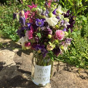 Aquilegia Granny Bonnet Seeds - gifts for grandmothers