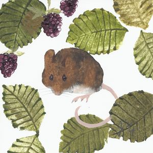 Limited Edition Print Wood Mouse