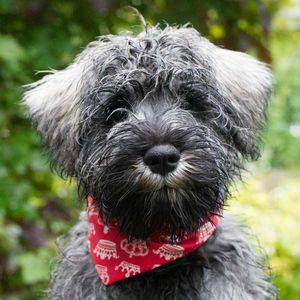 Dog Neckerchief Red Prints