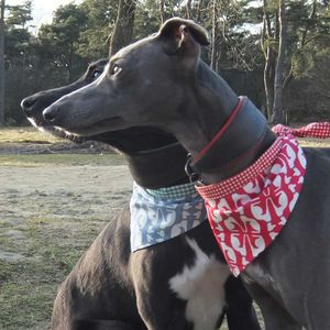 Dog Neckerchief Hound Dog - dogs