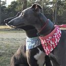 Dog Neckerchief Hound Dog