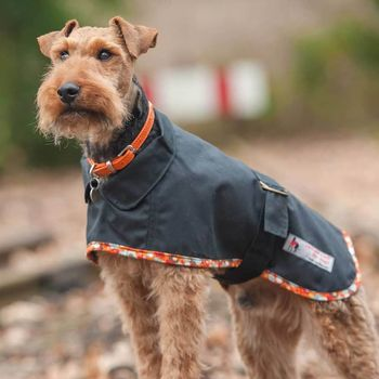 Terrier Waterproof Dog Coat Black