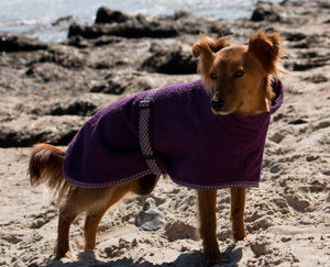Towelling Dog Coat And Mini Towel - pet clothes & accessories