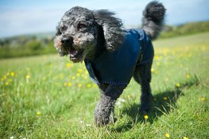 Waterproof Dog Rain Mac - pet clothes & accessories