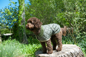 Quilted Dog Coat - clothes