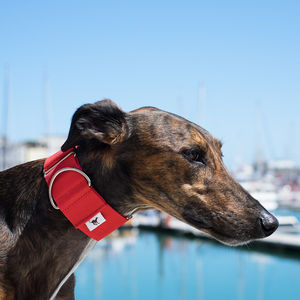 Finnstown Martingale Hound Collar - dog collars