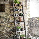 Provence Ladder Shelf - garden