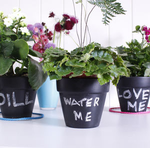 Personalised Blackboard Plant Pot - gardening