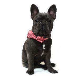 Red Gingham Dog Collar - dogs